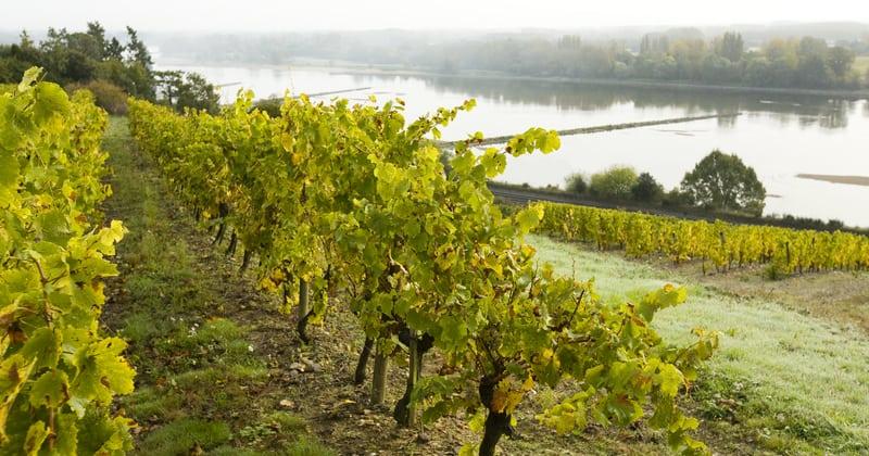 Saumur Wine Tour credits Stevens_Frémont