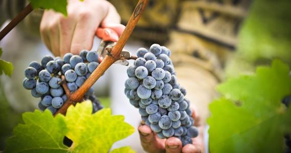 Bordeaux Food Tour - PC_vendanges19 Credits Pape Clement