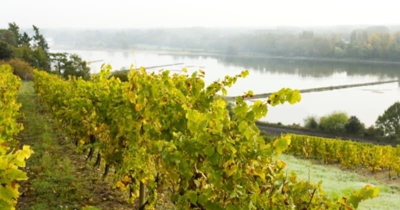 Saumur Wine Tour - Credits Stevens Fremont