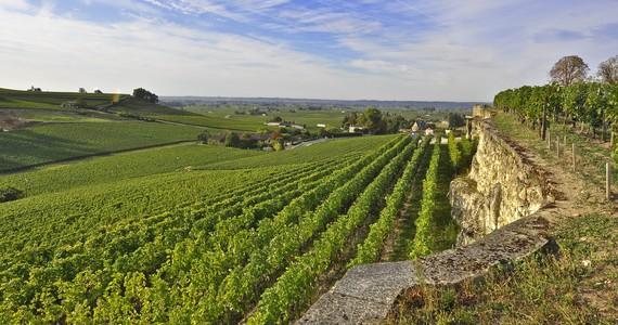 Bordeaux Food Tour - Credits Heurisko