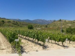 Rioja Vineyards- No Credits Needed