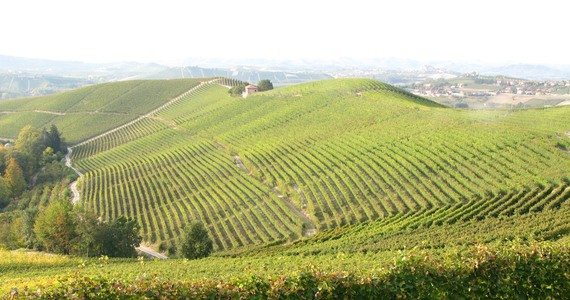 Barolo wine tour - Credits Langhe
