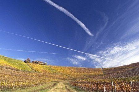 Piedmont Wine Tour - Fontanafredda vineyards