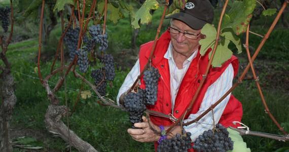 Piedmont Wine Tour - Credits Cantina Marsaglia