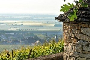 Le Richebourg Website 2013-galerie-photo-Vineyards