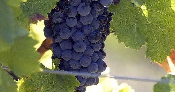 France Wine Tour- RAISIN_L.PASCALE ADT 26