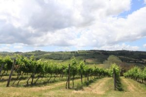 iena wine tour- Credit Florence Town