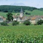 Wine Tour in Burgundy - Vosne Romanee