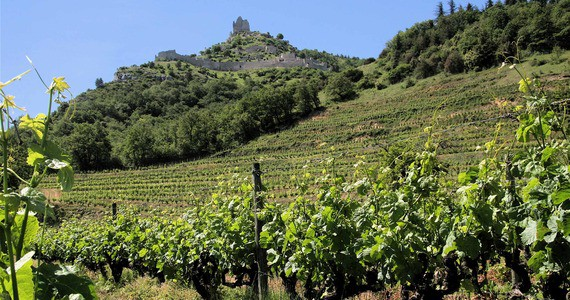 Rhone Valley wine tour - vignes sous crussol