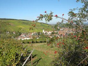 Alsace wine tour Barr Wine Road © C. Fleith 056