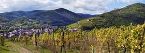 Alsace Wine Tour Ribeauvillé Wine Road © Zvardon CIVA