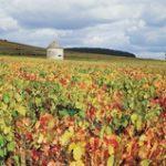 Dijon Wine Tours- Credits Côte-d'Or Tourisme © J-M. SCHWARTZ
