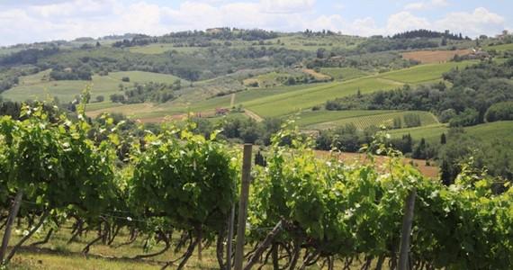vineyard tours - Credits Florence Town