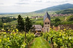 Alsace Vineyard 3- Credits Meyer and ADT Alsace