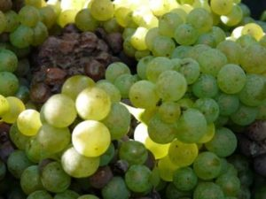 Burgundy Wine Tour- Credits La Chouette 3