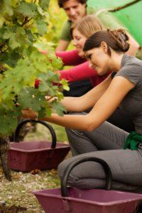Corporate Wine Tasting Credit Deepix