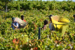 Harvest wine tour
