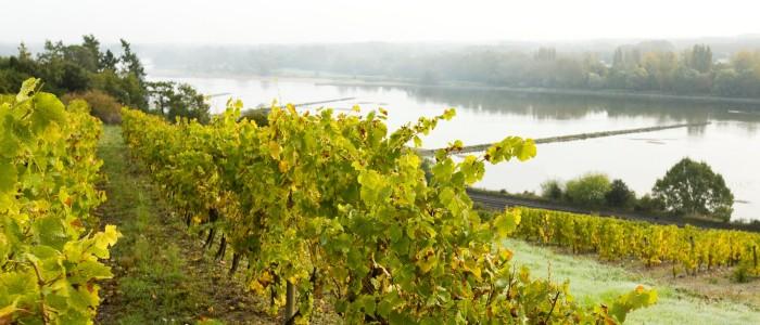 Loire Vineyards- Credits Stevens Frémont