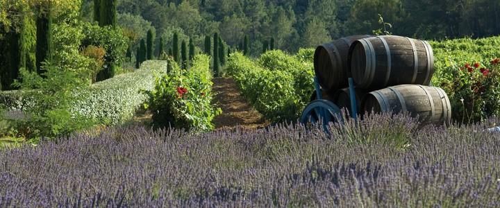 Team Building Wine Tasting- Credits Chateau de Berne