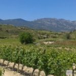 rioja wine tour -vines