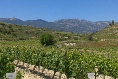 rioja wine tour -vines