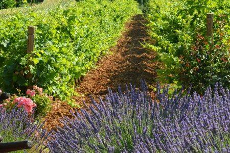 Luxury wine tours140707-vignoble-chateau-de-berne
