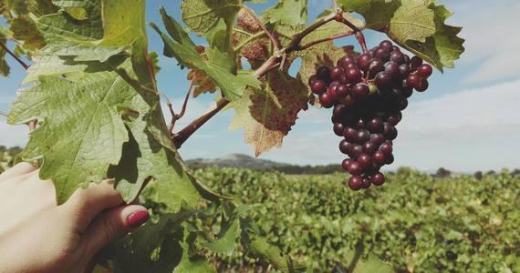 Luxury wine tours - Credits Chateau Paradis