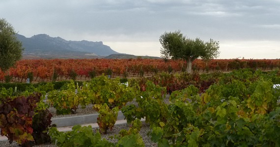 Rioja Wine Tours - Credits Rioja Vineyards