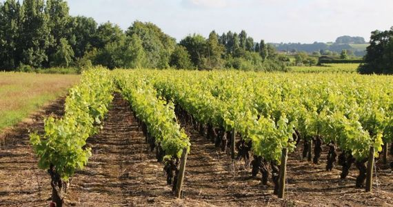 Loire Valley Wine Tours - IMG0681