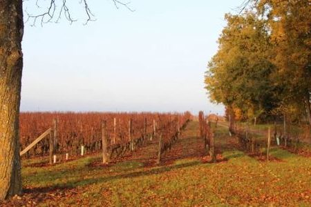 Loire Valley wine Tours - nantes-wine-tours-angers