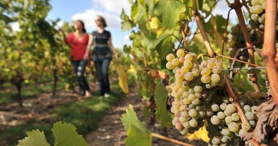 Loire Wine Tour - Credits JD Billaud
