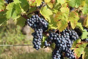 Loire Wine Tour Angers Loire Valley