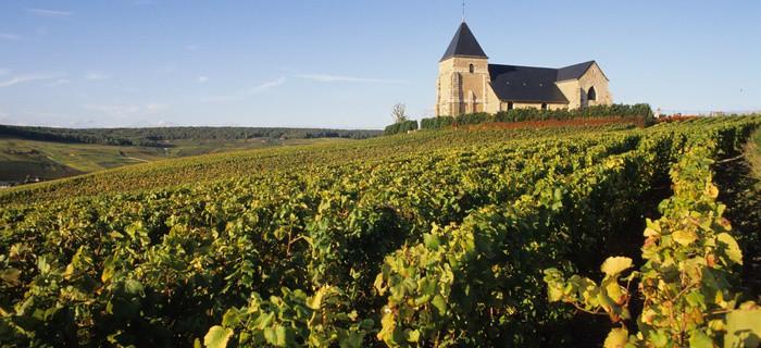 Champagne Harvest Tour ©JM.Lecomte