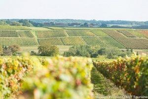 Loire Wine Tour Chenonceaux_vineyards © 2014 - Stevens Frémont - ADT TouraineInterloire