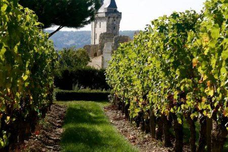 Loire wine tour - credits Mathieu_Garçon