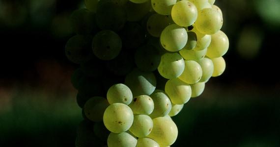Colmar wine tasting- credits Chateau d'Isenbourg