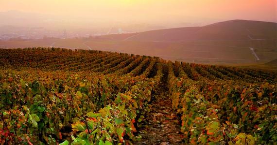 Epernay vineyard tour ©JK.Graeber