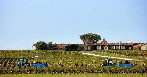Bordeaux winery tour © Deepix - Extensive Bordeaux