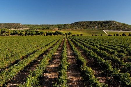 Credits Abadia Retuerta Vineyards