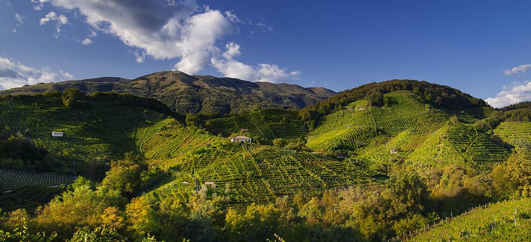 Tailor made wine tours- credits Locanda la Candola