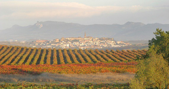Rioja vineyards 2