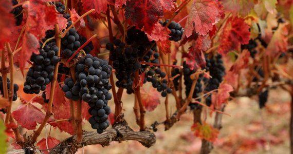 Rioja, San Sebastian and Bilbao wine tour