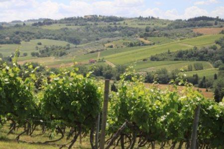 Tuscany Vineyards - Credits Florence Town