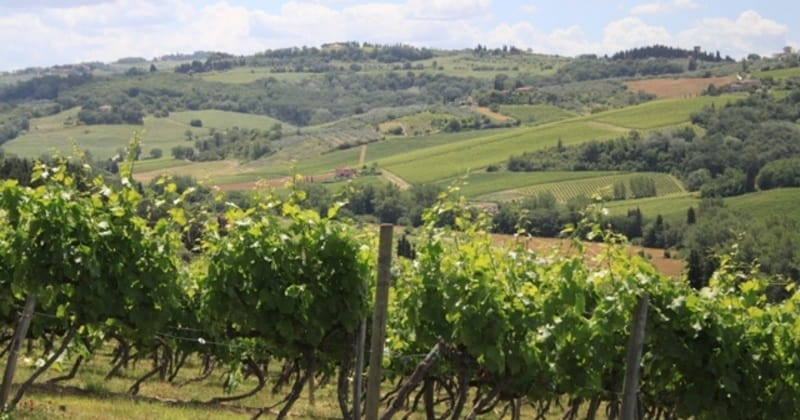 Tuscany Vineyards - Credits Florence Town