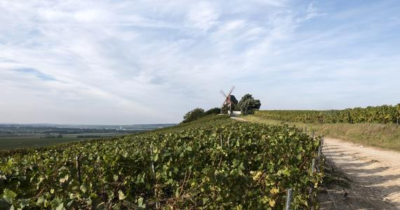 Champagne tasting in Epernay - photo-1506780444084-0e121609d32d (1)